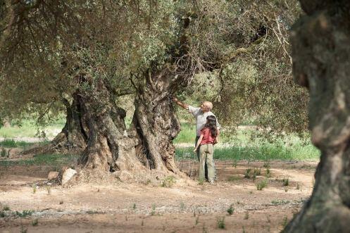 Manu Zapata_El cine (de estreno) fácil de leer_vivazapata.net_EL OLIVO_Abuelo y nieta con el olivo en la lejanía